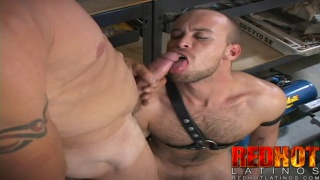 Hung latin fucks masculine bottom