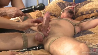 bound Texan stud receives his first edging