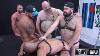 bald bottom gets gang banged in leather sling