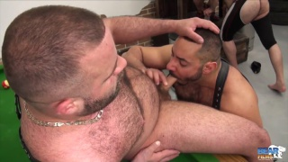 three bears servicing big-bellied Daddy bear