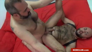 hairy bear man fucks bald bottom in bed